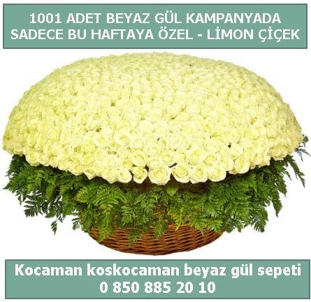 1001 adet beyaz gül sepeti özel kampanyada  Ankara çiçek gönderme sitemiz güvenlidir