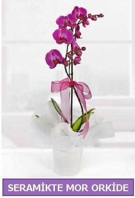 Seramik içerisinde birinci kalite tek dallı mor orkide  Ankara İnternetten çiçek siparişi