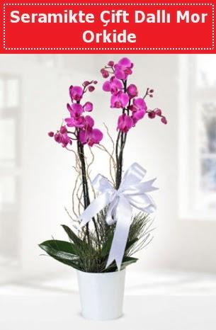 Seramikte Çift Dallı Mor Orkide  Ankara anneler günü çiçek yolla