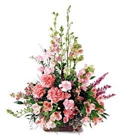 Ankara ucuz çiçek gönder  mevsim çiçeklerinden özel