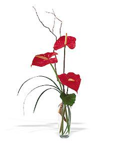 Ankara çiçek siparişi sitesi  cam yada mika Vazoda 3 adet  antoryum
