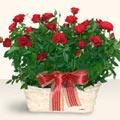 Ankara İnternetten çiçek siparişi  11 adet kirmizi gül sepette