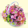 Ankara yurtiçi ve yurtdışı çiçek siparişi  bir sepet dolusu kir çiçegi  Ankara çiçek gönderme sitemiz güvenlidir