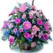 karisik mevsim kir çiçekleri  Ankara çiçek gönderme sitemiz güvenlidir