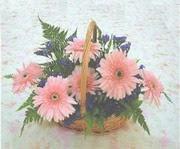 gerbera çiçeklerinde sepet   Ankara çiçek yolla