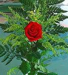 1 adet kirmizi gül buketi   Ankara çiçek siparişi vermek