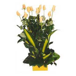 12 adet beyaz gül aranjmani  Ankara kaliteli taze ve ucuz çiçekler