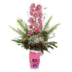 Ankara hediye çiçek yolla  cam yada mika vazo içerisinde tek dal orkide çiçegi