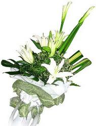 Ankara güvenli kaliteli hızlı çiçek  3 dal kazablanka çiçegi ve yesillikler