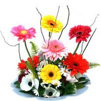 Ankara hediye çiçek yolla  camda gerbera ve mis kokulu kir çiçekleri