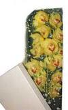 Ankara çiçek gönderme  Kutu içerisine dal cymbidium orkide