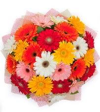 15 adet renkli gerbera buketi  Ankara yurtiçi ve yurtdışı çiçek siparişi