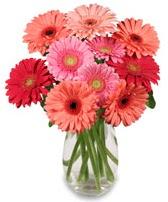 vazo içerisinde 13 adet gerbera çiçeği  Ankara çiçek siparişi sitesi