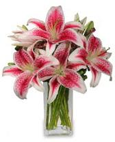 Vazo içerisinde 5 dal kazablanka çiçeği  Ankara cicekciler , cicek siparisi