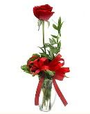 vazo içerisinde 1 adet kırmızı gül  Ankara çiçekçi telefonları