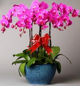 7 dallı mor orkide  Ankara çiçek online çiçek siparişi