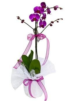 Tek dallı mor orkide  Ankara çiçekçi telefonları