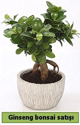 Ginseng bonsai japon ağacı satışı  Ankara çiçekçi telefonları