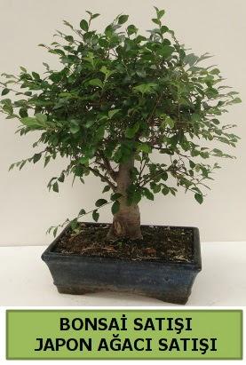 Minyatür bonsai japon ağacı satışı  Ankara çiçek gönderme sitemiz güvenlidir