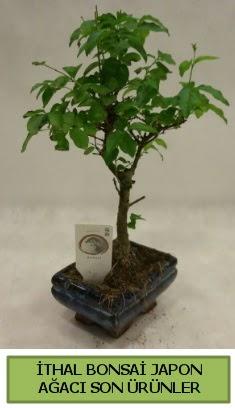 İthal bonsai japon ağacı bitkisi  Ankara hediye sevgilime hediye çiçek