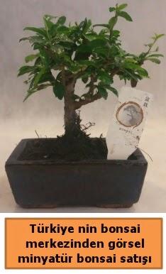 Japon ağacı bonsai satışı ithal görsel  Ankara çiçek yolla