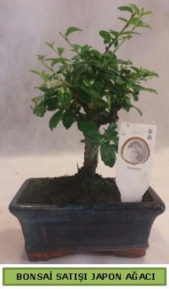 Minyatür bonsai ağacı satışı  Ankara çiçek gönderme
