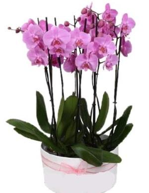 Beyaz seramik içerisinde 7 dallı mor orkide  Ankara çiçekçi telefonları