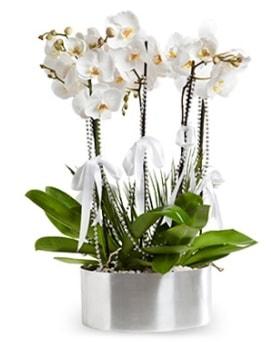 Beş dallı metal saksıda beyaz orkide  Ankara çiçek yolla