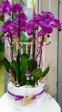 Seramik vazoda 4 dallı mor lila orkide  Ankara online çiçek gönderme sipariş