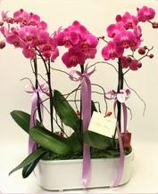 Beyaz seramik içerisinde 4 dallı orkide  Ankara ucuz çiçek gönder