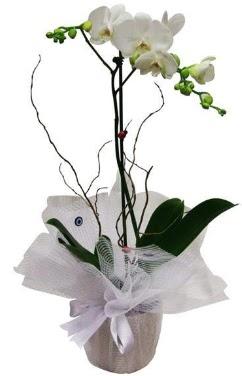 Tek dallı beyaz orkide  Ankara cicek , cicekci
