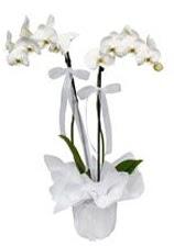 2 dallı beyaz orkide  Ankara güvenli kaliteli hızlı çiçek