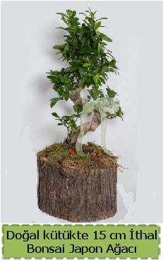 Doğal kütükte İthal bonsai japon ağacı  Ankara çiçek gönderme