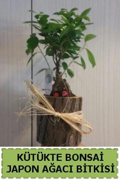 Kütük içerisinde doğal bonsai ağacı  Ankara çiçekçi telefonları
