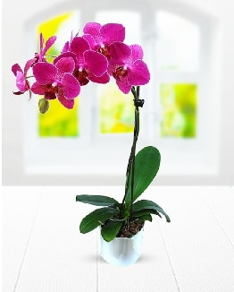 Tek dallı mor orkide  Ankara çiçek satışı