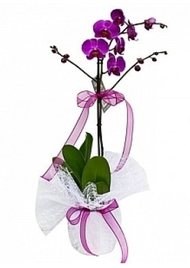 Tekli Mor Orkide  Ankara çiçek yolla