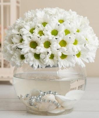 Fanusta beyaz Papatya  Ankara çiçek satışı