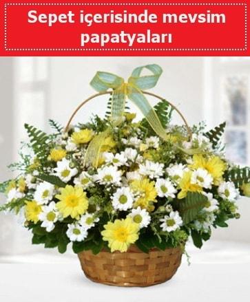 Sepet içerisinde mevsim papatyaları  Ankara ucuz çiçek gönder